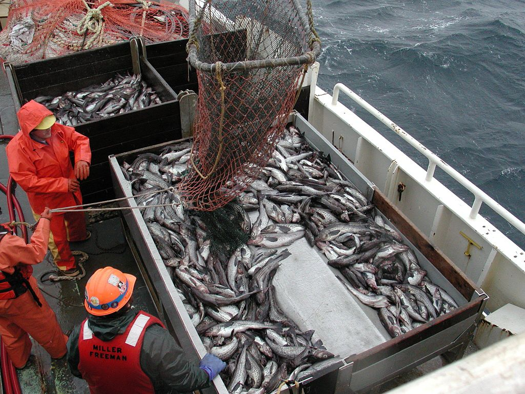 Georgetown public policy review a new approach to for What is commercial fishing